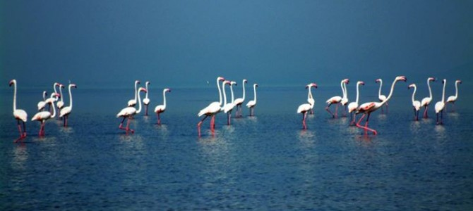 ISRO and NASA to carry out India's first hyperspectral study in Chilika Lake Odisha