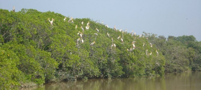 14 islands in Bhitarkanika National Park to get a makeover for Tourists