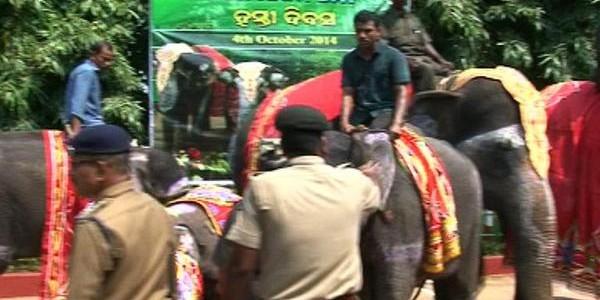 Nandankanan Zoo celebrates Elephant Day