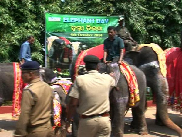 nandankanan observes elephant day