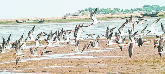 Odisha starts process to apply World Heritage Tag for Bhitarkanika National Park