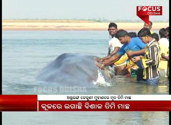 astarang whale