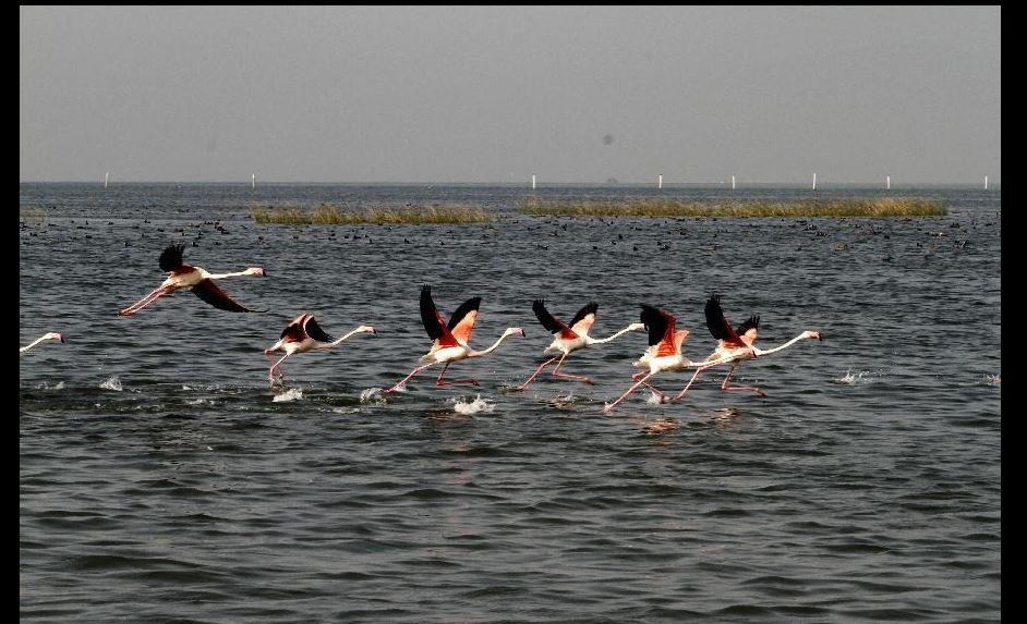 chilika capture 11