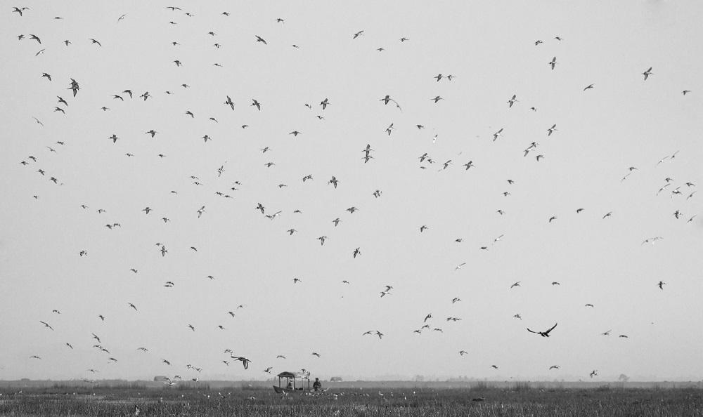 Boat and birds at Mangalajodi bhubaneswar buzz
