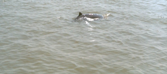Bhitarkanika has more Dolphins in Odisha than Chilika Lake