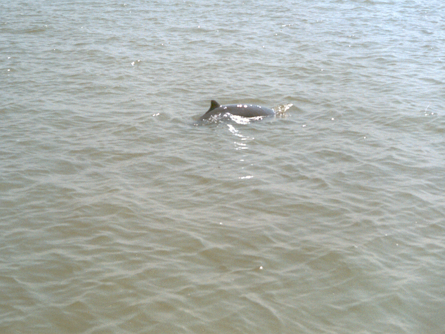 Chilika-lake-Dolphin