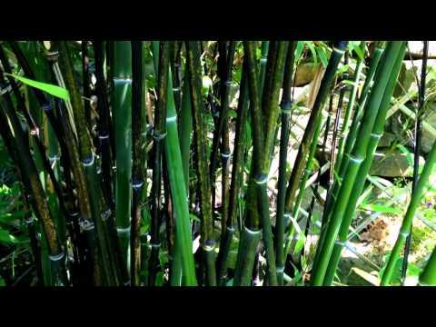 bamboo garden bhubaneswar buzz