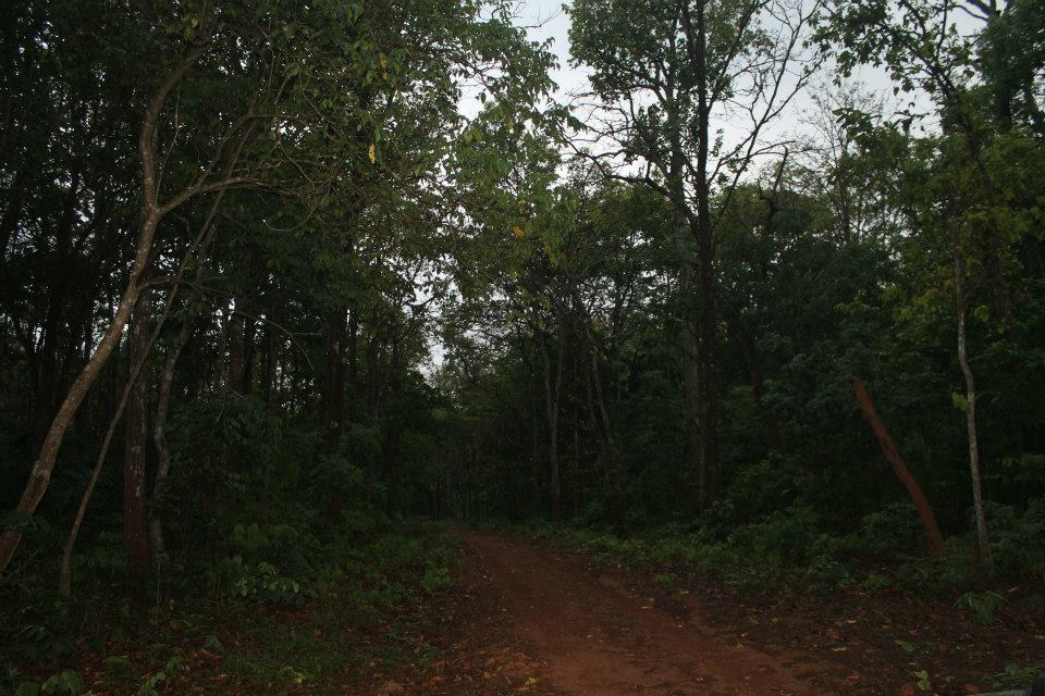 Similipal National park bhubaneswar buzz 1