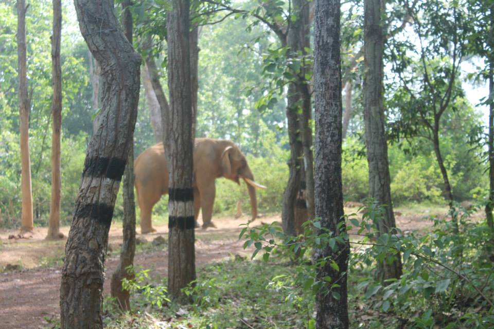 Similipal National park bhubaneswar buzz 4