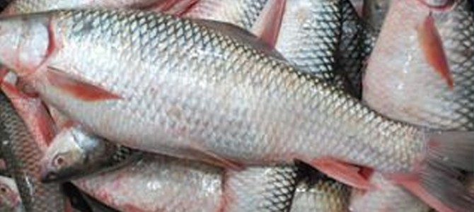 """We Odiyas love a """"fishy"""" affair – A nice blog by Amrita Satpathy"""