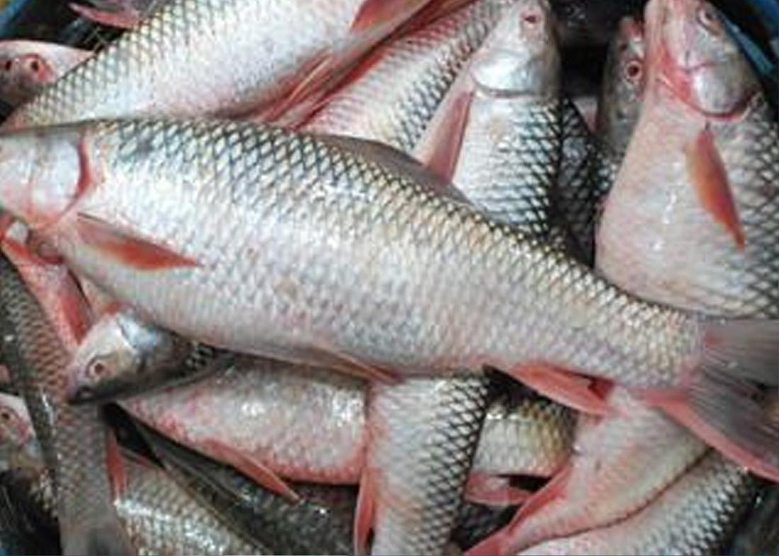 fish bhubaneswar buzz odisha