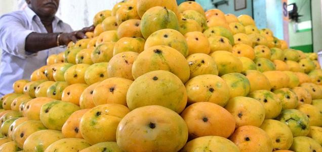 Odisha exports Mangoes to many North India cities because of bumper harvest this season