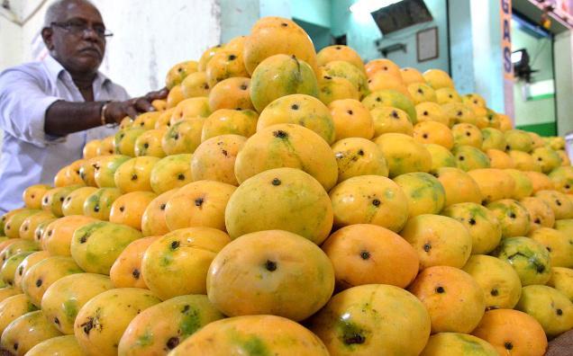 mangoes odisha bhubaneswar buzz