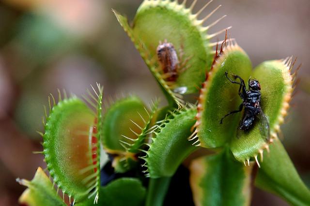 carnivorous plants nandankanan bhubaneswar