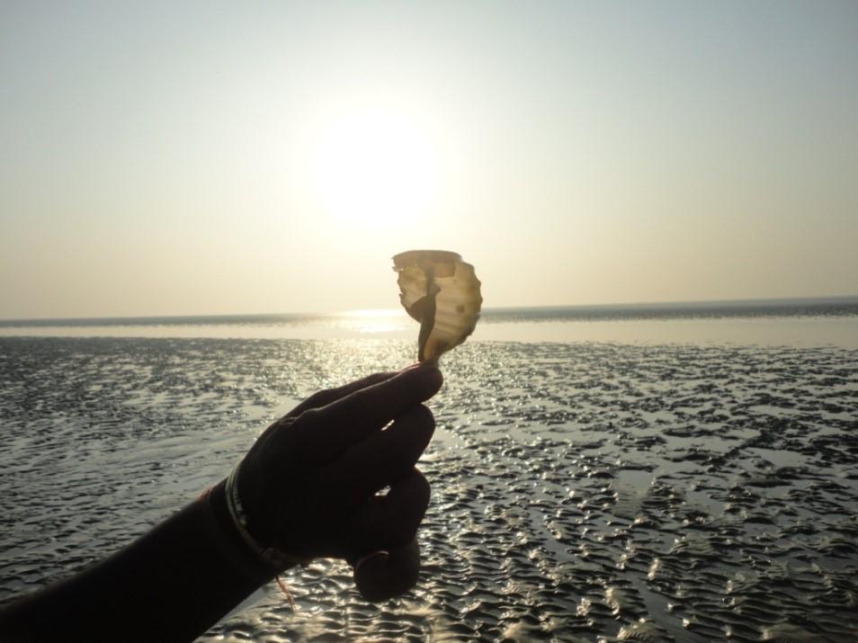chandipur beach soumyajit bbsrbuzz 1