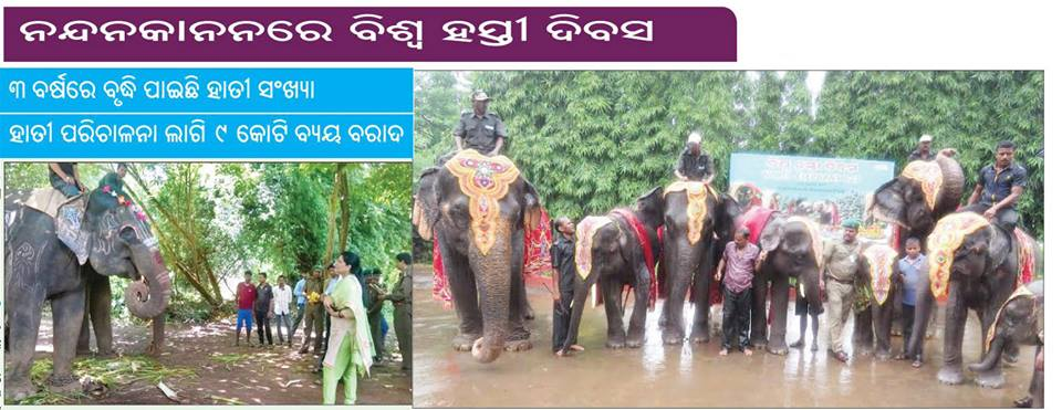 world elephant day bhubaneswar buzz 1