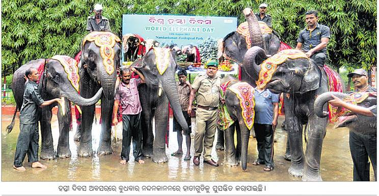 world elephant day bhubaneswar buzz 2