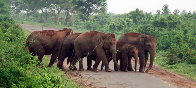Tourists visiting Chandaka Wildlife Sanctuary to be provided Open top Jeeps