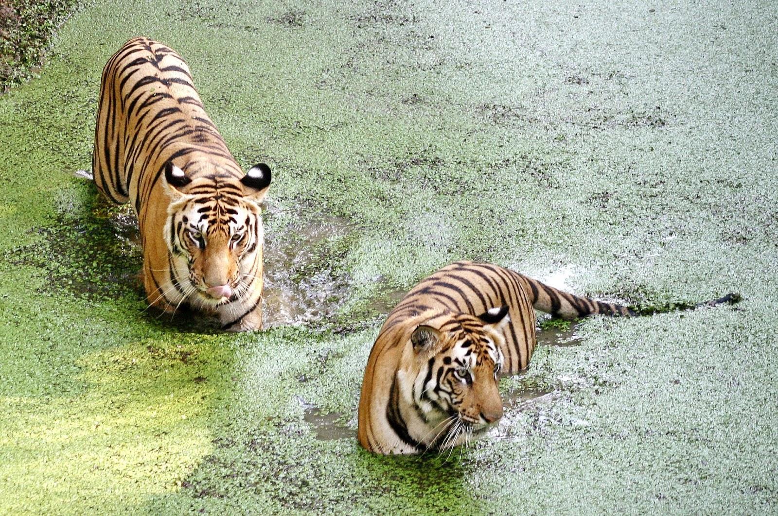 Nandankanan Zoo1