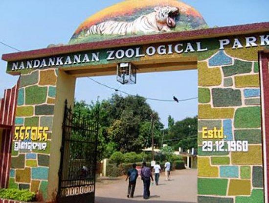 nandankanan zoo bhubaneswar buzz