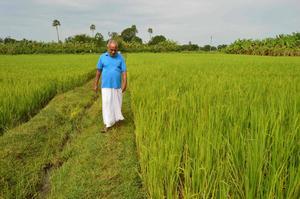 natwar sarangi bhubaneswar buzz organic rice farming