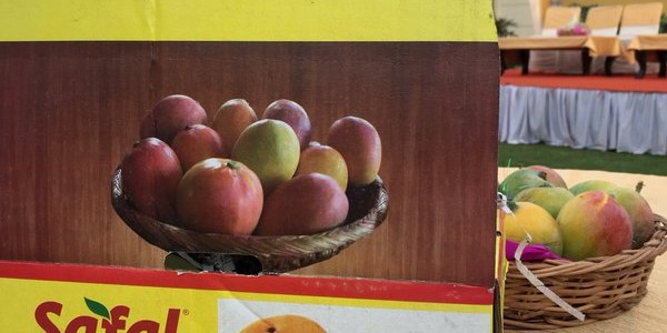 Nice to see Odisha Mangoes to get a platform for marketing in Delhi by Safal