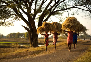 odisha village women