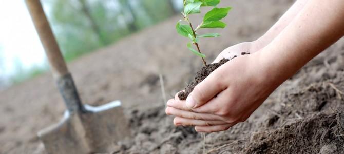 Satyanarayan Das : Man from Odisha who has planted trees in 15 states already