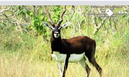 Odisha express black bucks bbsrbuzz 4