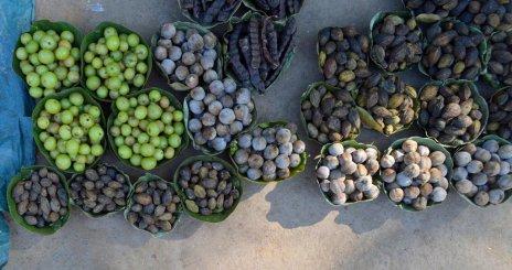 Odisha express koraput jungle produce bbsrbuzz 3