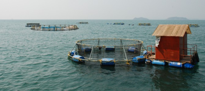 CMFRI  introduced in Puri cage fish farming- the first of its kind in Odisha