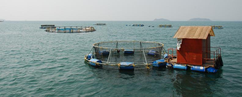sea cage farmin odisha