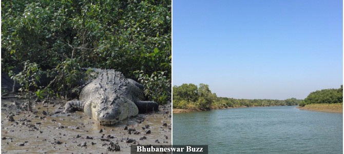 Odisha hopeful of getting World Heritage Tag for Bhitarkanika National Park very soon