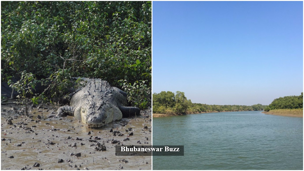Bhitarkanika national park world heritage bbsrbuzz