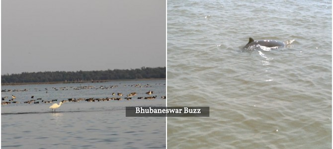 Nice to see Rare Irrawaddy dolphins find a second home in Bhitarkanika Odisha after Chilika