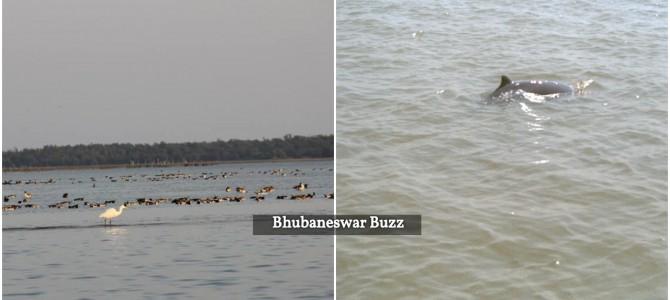 Chilika lake largest habitat of Irrawaddy dolphins globally