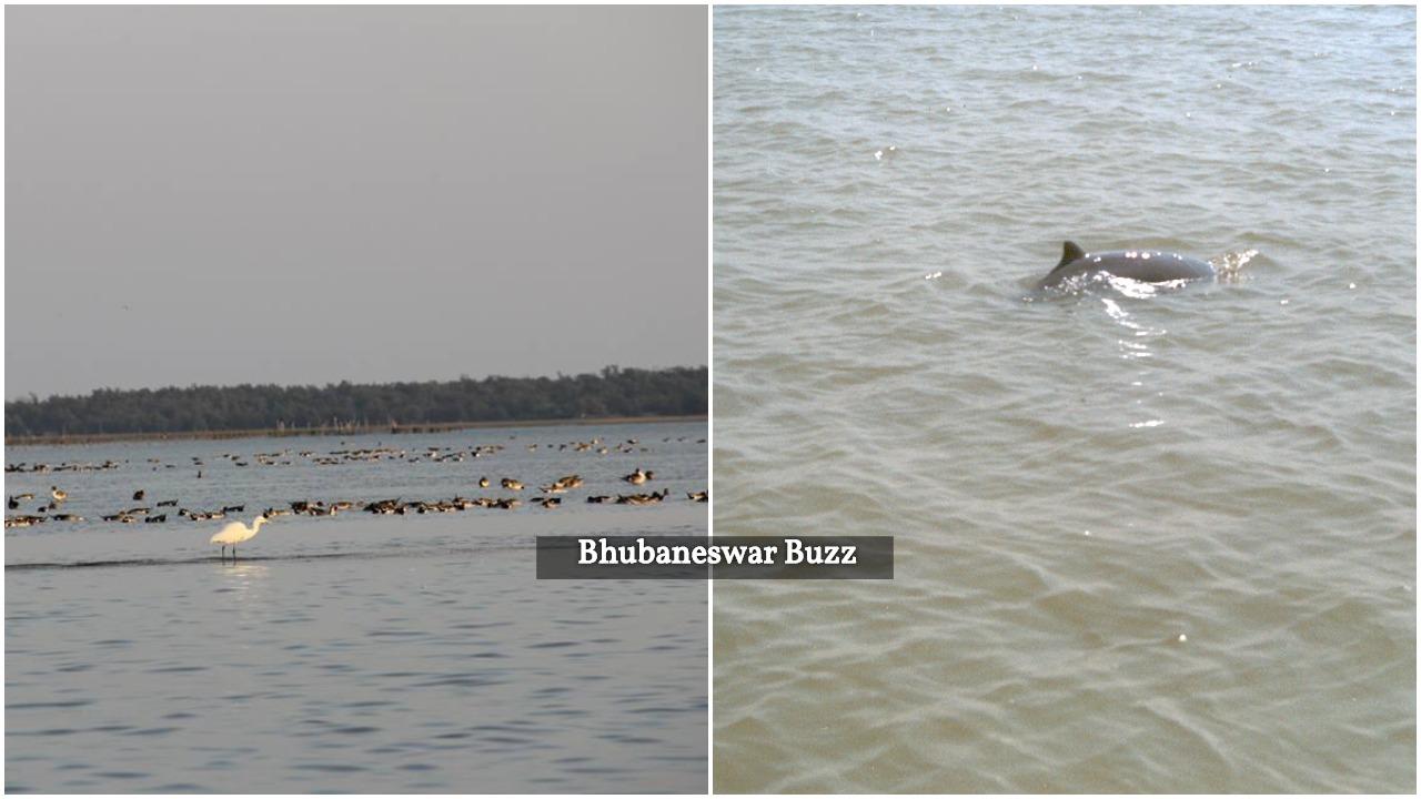Satpada dolphins bhubaneswar buzz odisha