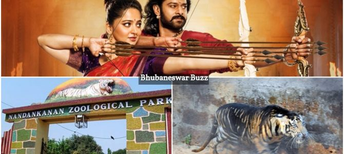 Nandankanan zoo will remember the name Baahubali for quite some time : A tiger cub has been named the same