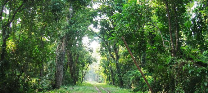 Women in a small village in Nayagarh show the way in saving forest