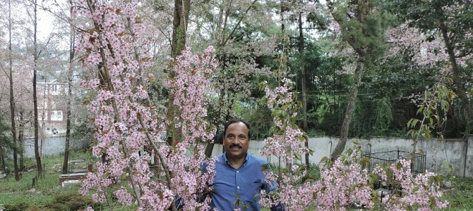 This professor from Odisha is the reason that Shillong has their famous Cherry Blossom Festival