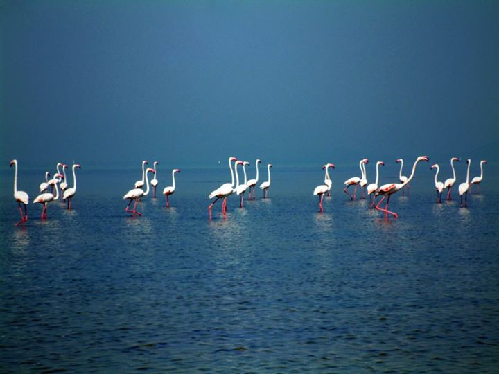 Its Time For Chilika Visit Birds Arriving In Asia S
