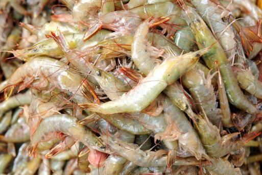 Odisha Govt To Open 7 Chilika Fresh Outlet In Bhubaneswar For Fresh Seafood Bhubaneswar Buzz