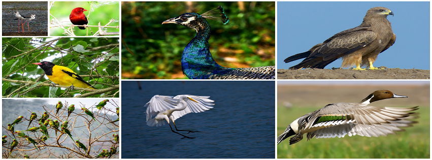 birds of odisha