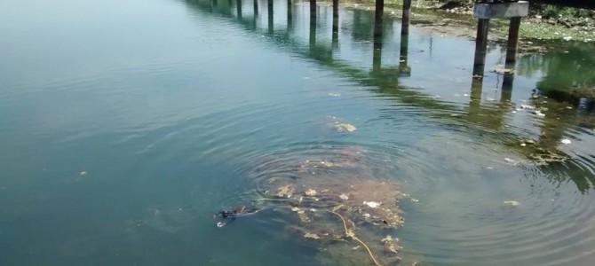 Kalinga Divers take on the Swachh Mahanadi Mission in Cuttack