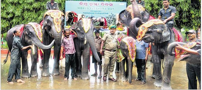 World Elephant Day celebrated in Nandankanan Zoo Bhubaneswar