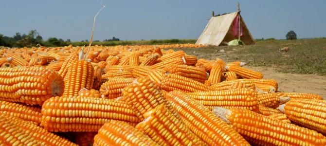Vijaynagar Bio-tech Pvt Ltd to set up a 50K tonnes maize processing unit at Papadahandi in Nabarangapur