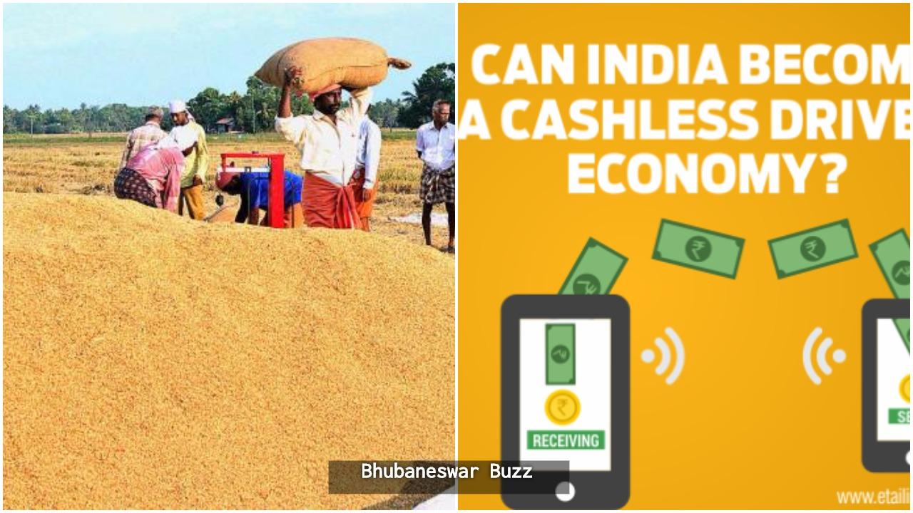 paddy procurement goes cashless in odisha