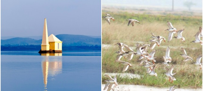 Odisha to host a National Bird Festival at Chilika in January-2018 to attract tourists and bird watchers