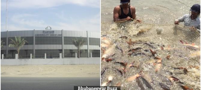 Dubai based MNC Darvesh plans 500 crore Fish processing unit in Odisha