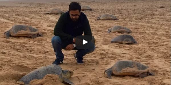 A beautiful video on his experience of Olive Ridley Turtles of Odisha – Arribada at Rushikulya